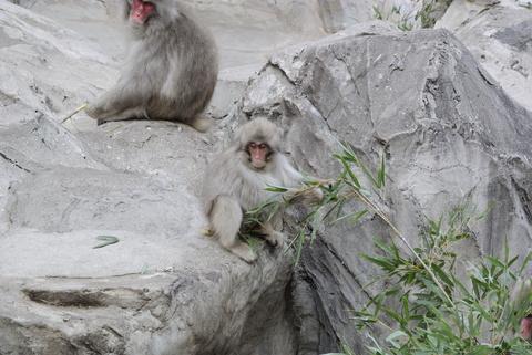 上野動物園034.jpg