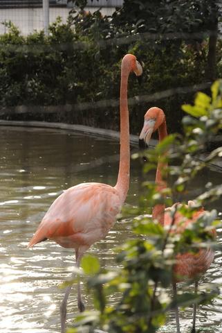 上野動物園069.jpg