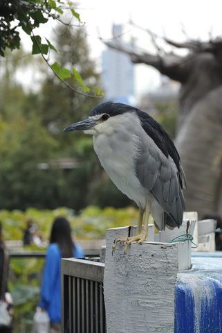 上野動物園086.jpg
