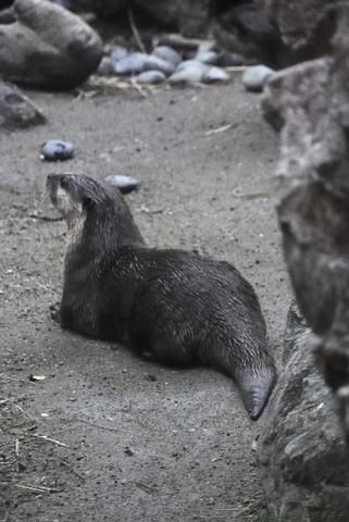 上野動物園145.jpg