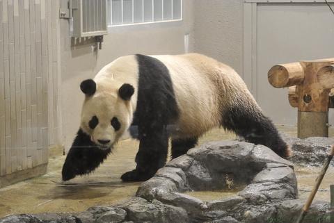 上野動物園160.jpg